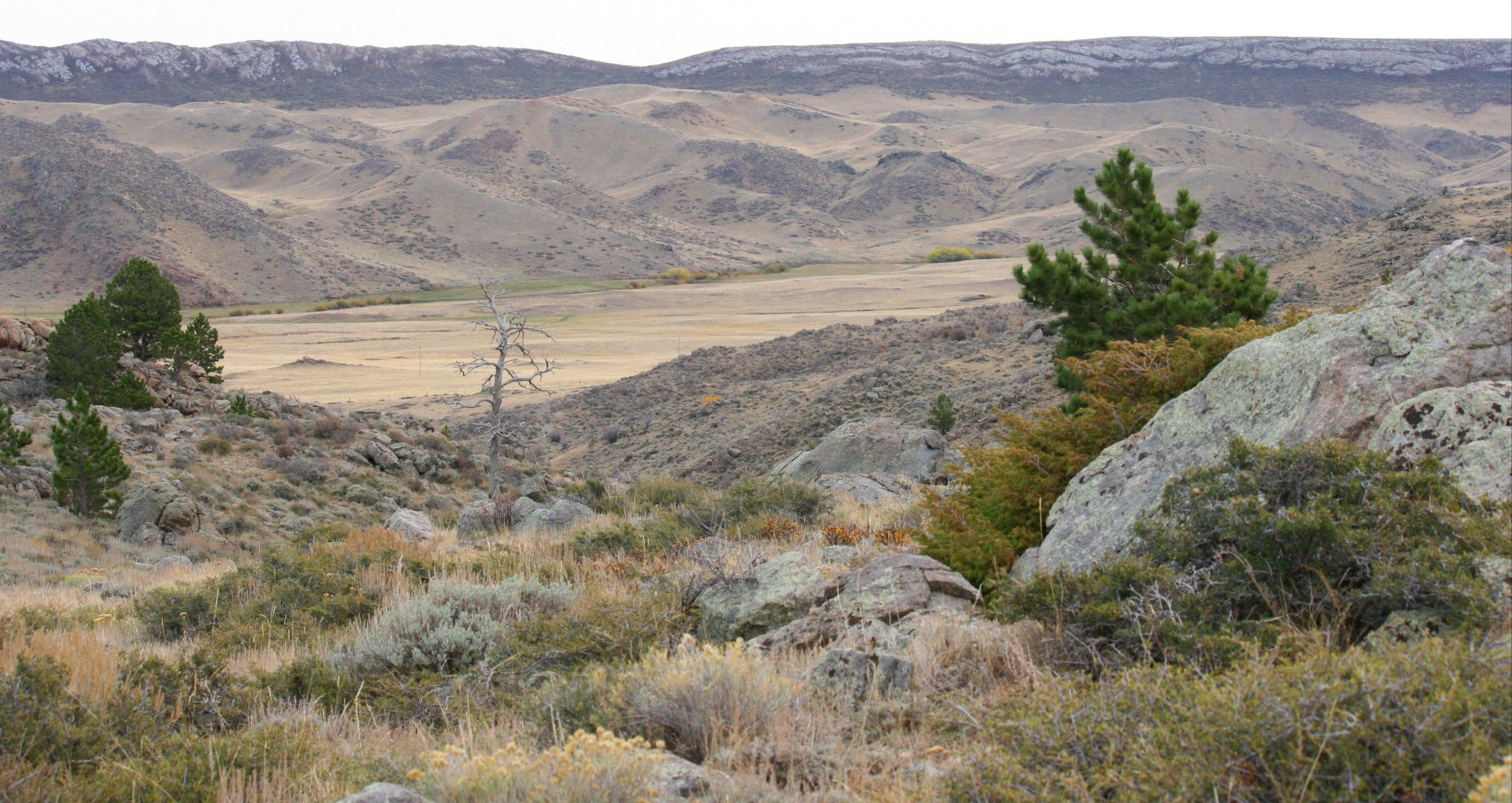 Timber canyon ranch outfitting tyler willis price list for Wyoming game and fish license